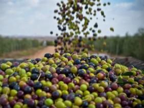 2510-23810-la-tunisie-s-attend-a-une-production-exceptionnelle-d-huile-d-olive-au-terme-de-la-campagne-20142015_L-433x324